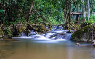 ruisseau dans la forêt photo