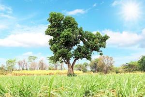 arbre vert isolé sur fond de nature