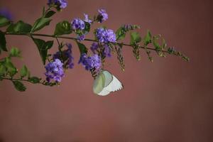 papillons de floride photo