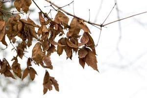 belles feuilles rouges