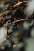 feuilles vertes abstraites photo