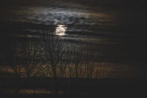 arbres nus avec la lune