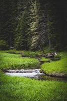 ruisseau et herbe