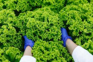 femme en gants bleus tient la salade verte dans ses bras