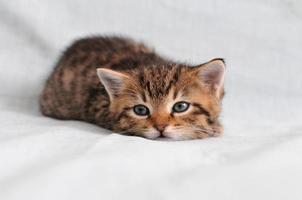 chaton pose photo