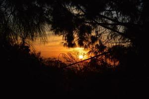 Lever du soleil sur Hollywood, Californie