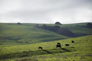 la vallée de Napa