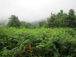 brouillard (Géorgie) photo