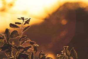 plantes pendant l'heure d'or