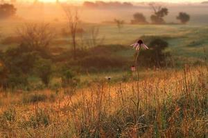 lever du soleil dans la prairie photo