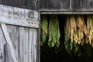 Grange à tabac de la Nouvelle-Angleterre photo
