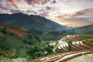 riz photo