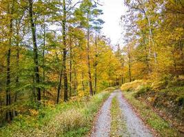 sentier entre les bois d'automne