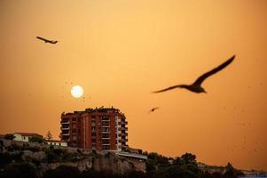 coucher de soleil derrière un bâtiment avec seagul et autres oiseaux qui volent