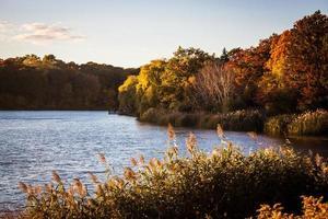 étang ensoleillé en automne