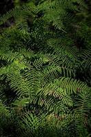 fougères vertes dans une forêt