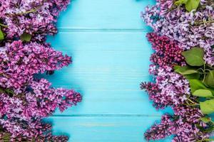 vue de dessus des fleurs lilas
