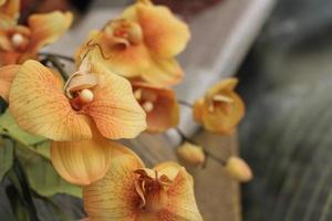 gros plan, de, orchidées jaunes