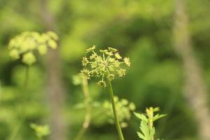 gros plan de fleurs dans les bois photo
