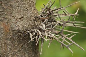 gros plan d'épines sur un arbre