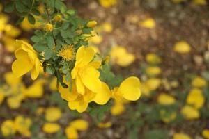 gros plan, de, fleurs jaunes