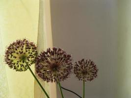 fleurs violettes près d'un rideau de fenêtre