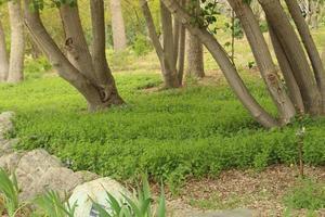 arbres et végétation dans un parc photo
