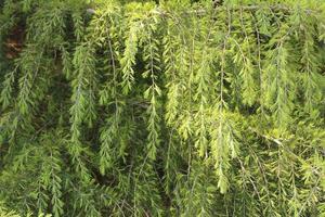 feuilles vertes sur les arbres photo