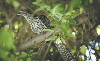oiseau tacheté dans l'arbre
