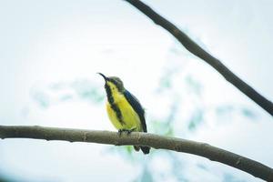 oiseau jaune et noir photo