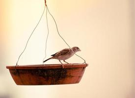 oiseau sur une mangeoire à oiseaux photo
