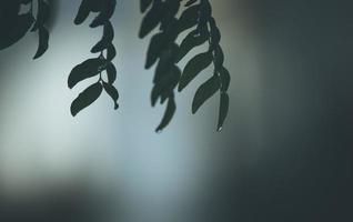 feuilles vertes maussades