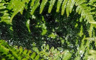 gouttes d'eau en toile d'araignée