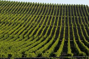 vignoble paysage-vignoble sud ouest de la france, bordeaux vignoble