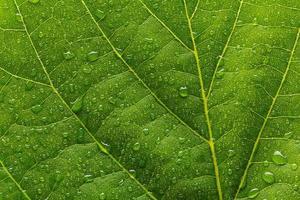 feuille verte avec des gouttes photo
