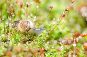 escargots et mousse