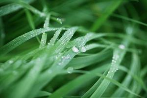 rosée d'herbe verte fraîche photo