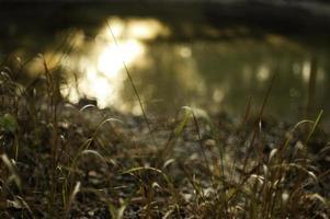 coucher de soleil orange reflétant dans le lac