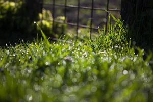 gouttes d'eau sur l'herbe