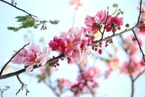 fleurs roses sur les arbres