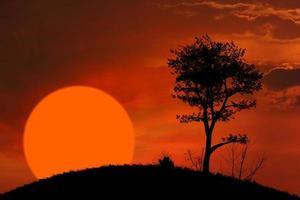 coucher de soleil et fond d'arbre photo