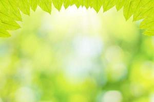feuilles vertes avec fond bokeh
