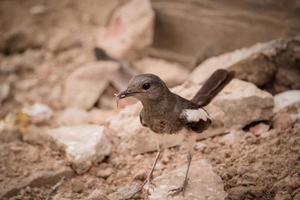 oiseau blanc et brun sur les rochers