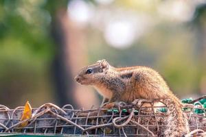 écureuil brun sur une clôture