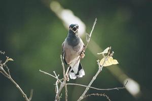 pigeon sur une branche d'arbre photo