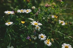 fleurs blanches et jaunes dans l'objectif tilt shift