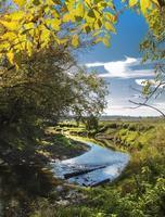 rivière entourée d'arbres par une journée ensoleillée photo