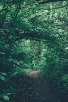 un chemin à travers les arbres verts et les plantes pendant la journée