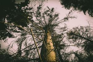 regardant les arbres au coucher du soleil