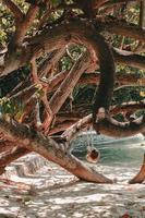 mangrove sur la plage photo